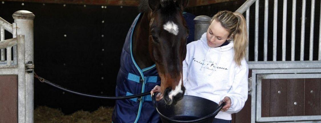 Does my horse need electrolytes