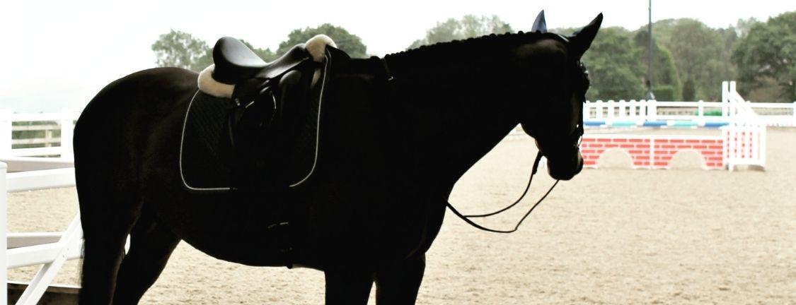Horse Vet Fees Case Study